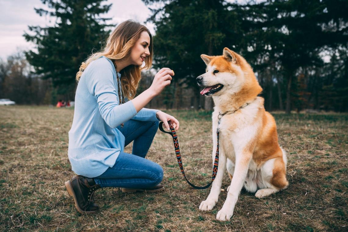 A legdrágább kutyafajták a világ körül – Hallottál már róluk?