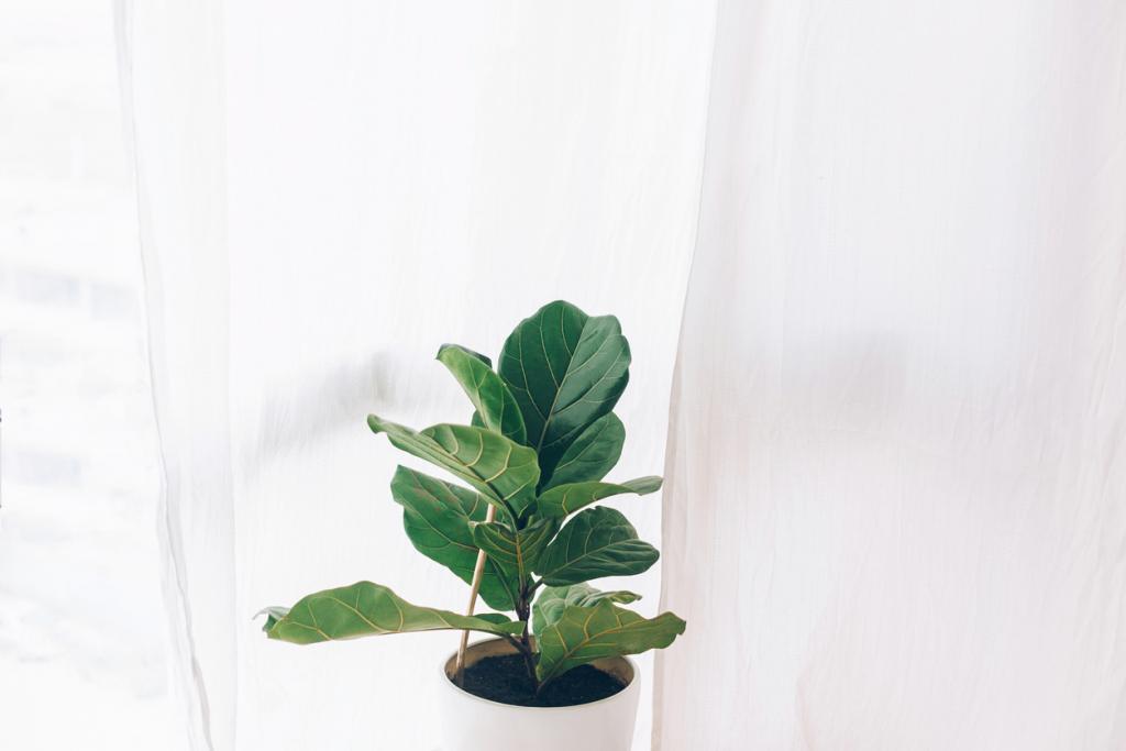 Gondoskodást igénylő szobanövények