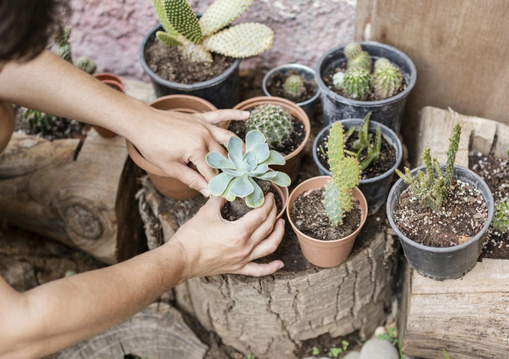 Kevés törődést igénylő szobanövények