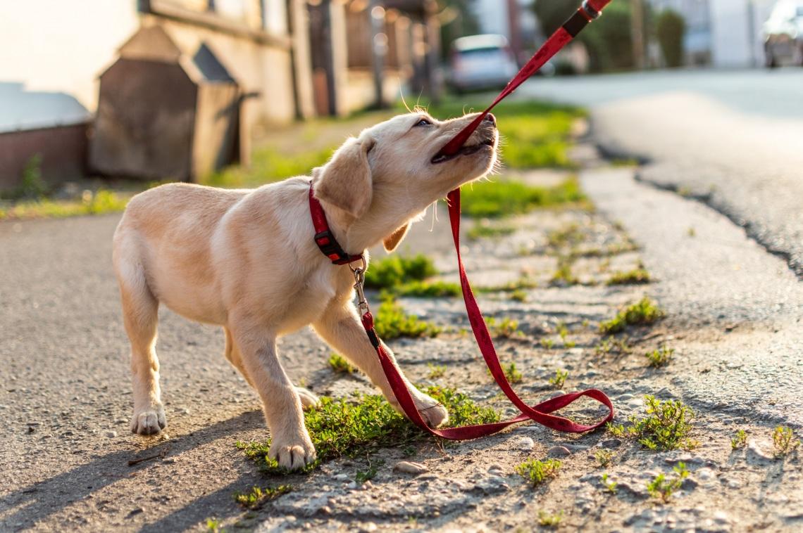 4 dolog, amit sose mondj a kutyádnak – A trénerek tanácsai