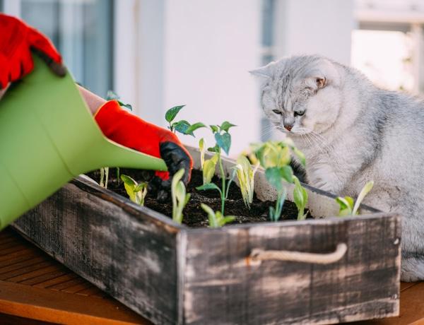 5 zöldség és gyümölcs, aminek el lehet ültetni a magját
