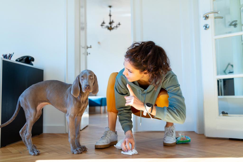 Kutya nevelés szabályok