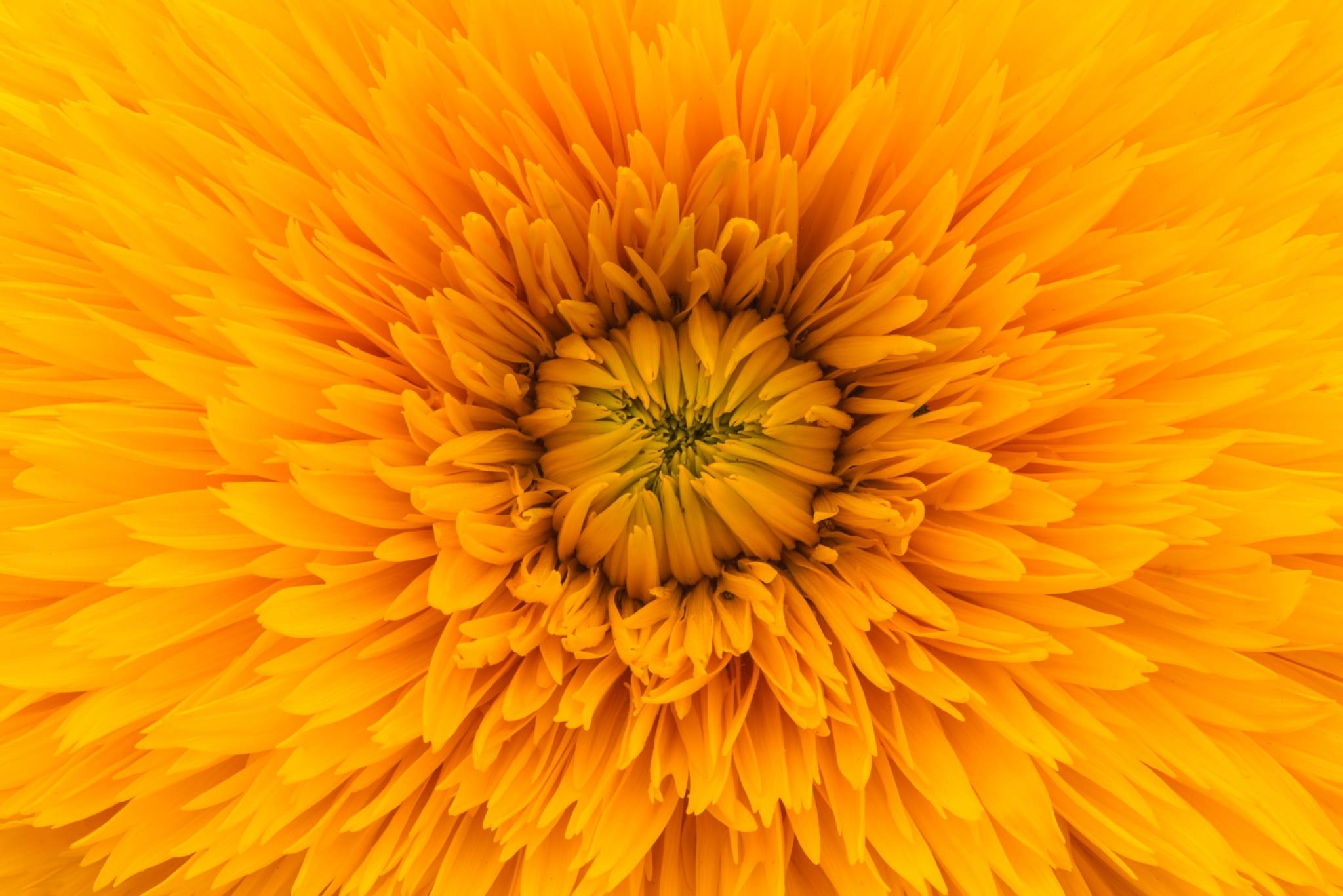 Sárga színű aura