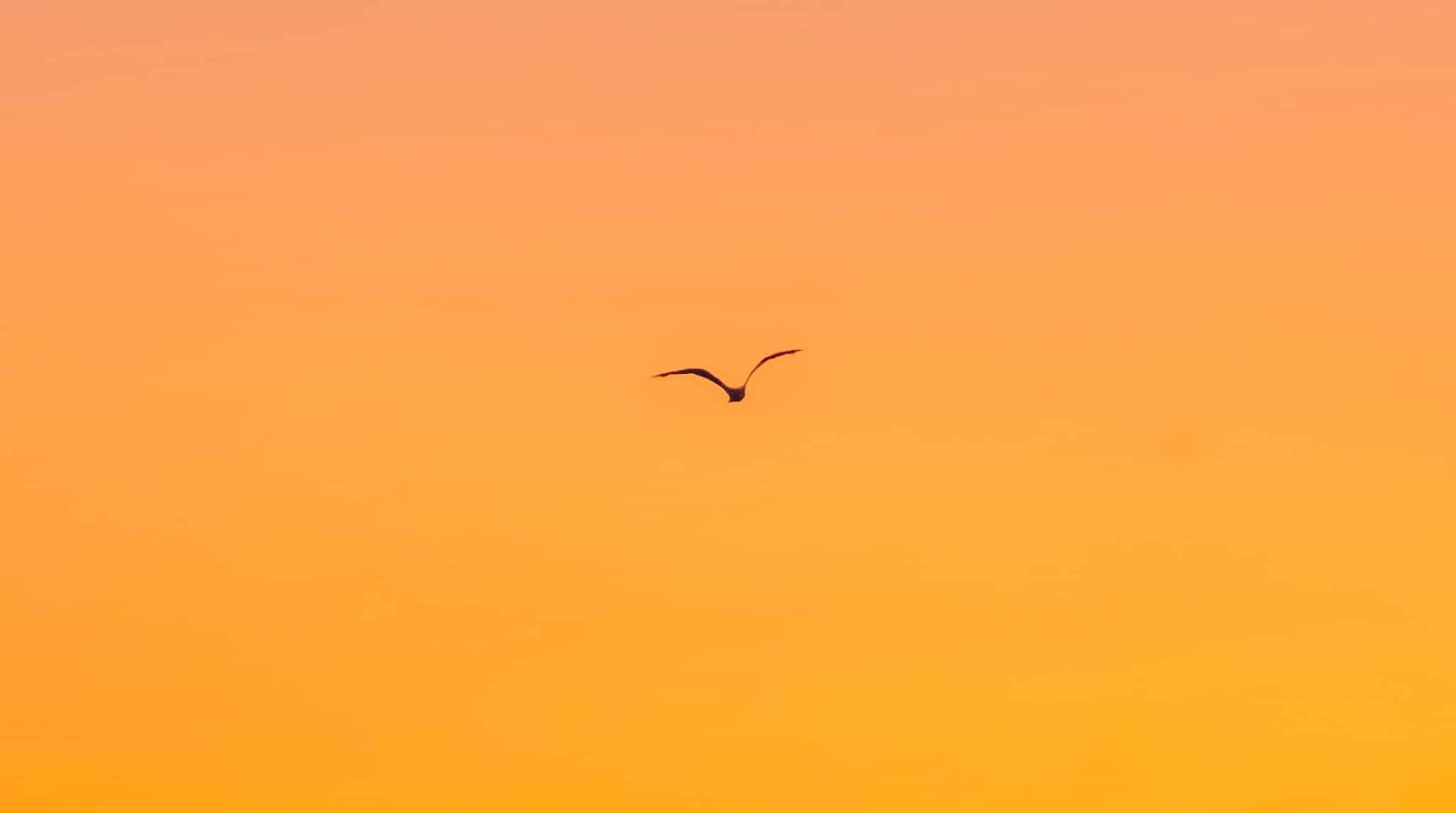 Narancssárga színű aura