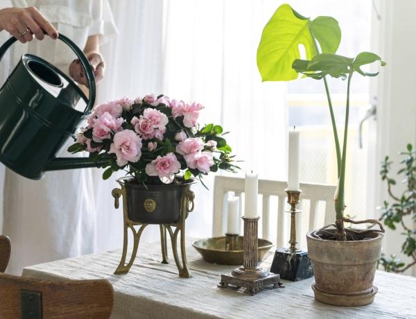 7 csodásan illatozó szobanövény, amely nem hiányozhat az otthonodból