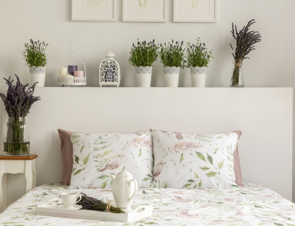 7 szobanövény, ami különleges illattal tölti meg a lakásodat