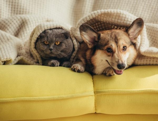 A kutya szemizmokat növesztett, hogy cukibb legyen? 10 meglepő tény