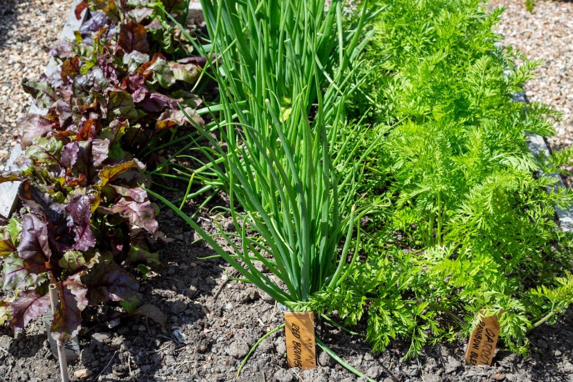 A 10 legegyszerűbben termeszthető zöldség a kertben