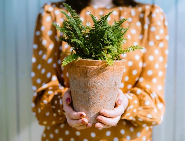 5 gyönyörű szobanövény, amivel feldobhatod a sötétebb helyiségeket is