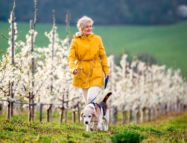 7 nyugis, kistermetű kutyafajta, amelyik tökéletes idősebb emberek mellé