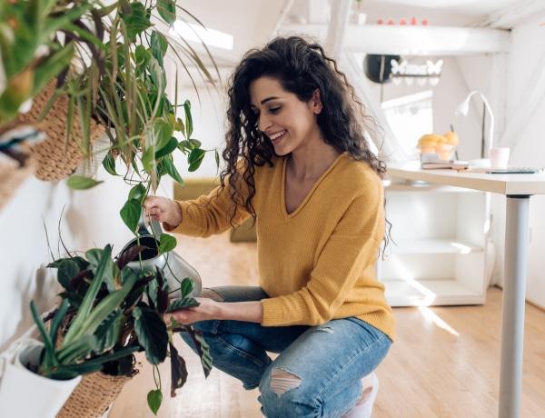 Íme a 10 legolcsóbb szobanövény, amit imádni fogsz