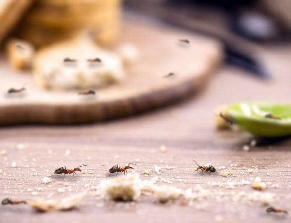 Ez a 6 meglepő dolog vonzza az otthonodba a bogarakat