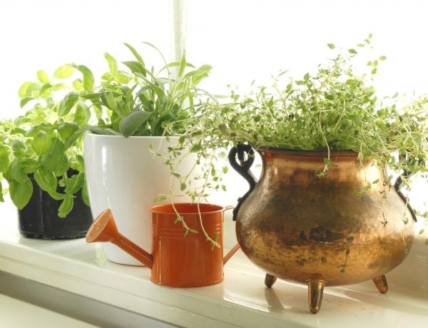 A tökéletes fűszerkert – Ezek a legfinomabb fűszernövények