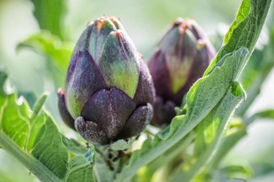 10 káprázatos zöldség, ami a virágos kertedben is helyet kaphat
