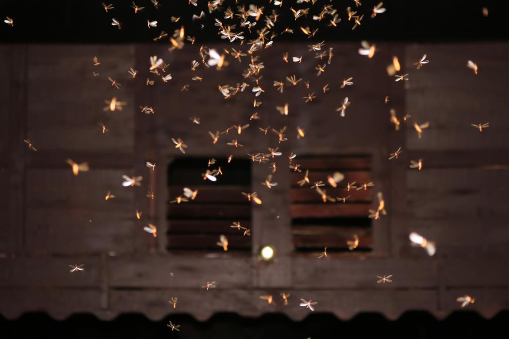 Fényforrások vonzzák a bogarakat