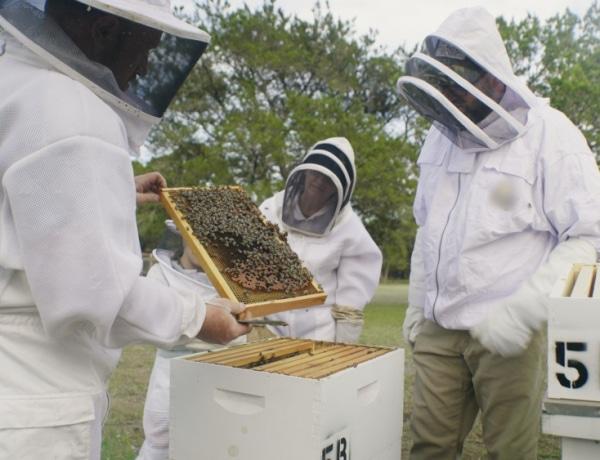 1 üveg méz = 3 Föld-körberepülés: kihalás veszélyezteti a méheket