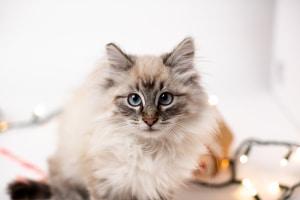 Teszt: Mi lenne a macskád első szava, ha tudna beszélni?