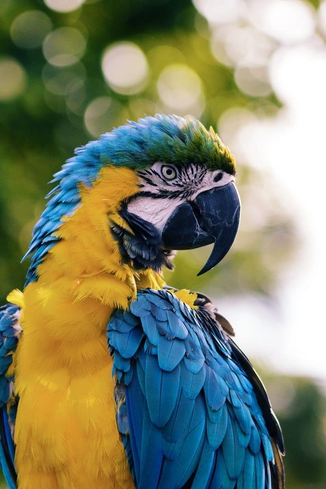 Február: A papagáj