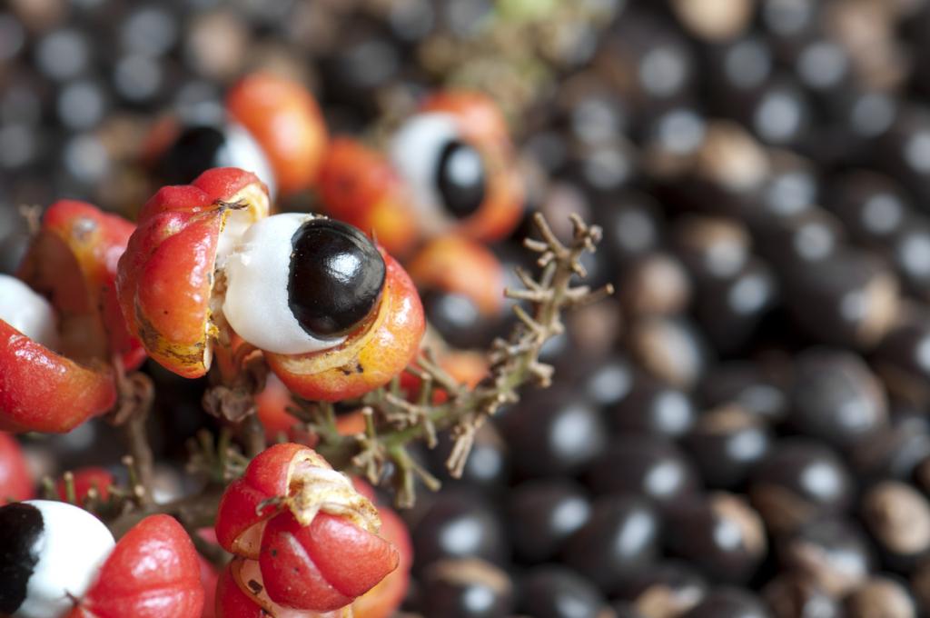 A guarana koffeintartalma