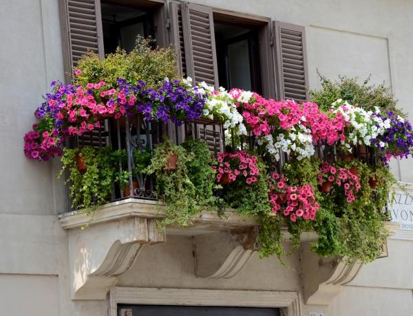 7 tarka balkonvirág, amit kevesen ismernek – Egyedi erkélyed lesz!