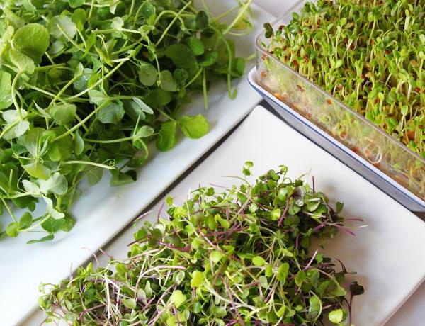 A dietetikus, aki mikrozöldeket nevel otthon – Hogyan hatnak a testünkre?