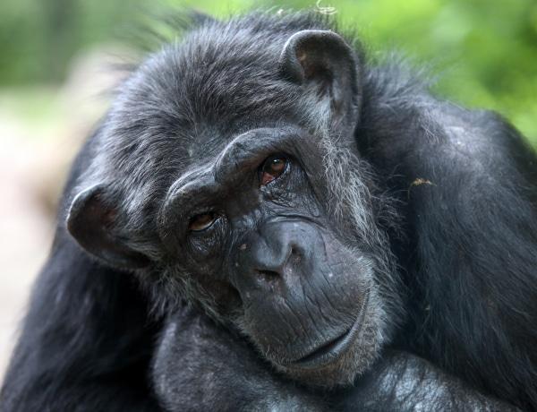 Merre tart az emberi evolúció? Érvényes még a Darwini elmélet?