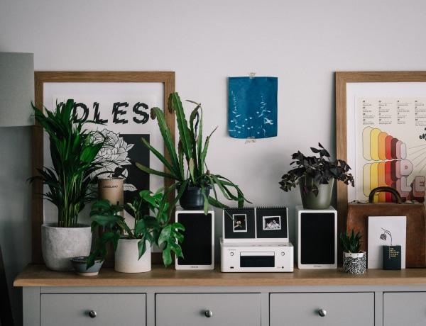 10 gyönyörű szobanövény kezdőknek, ami  biztosan sikerélményt ad