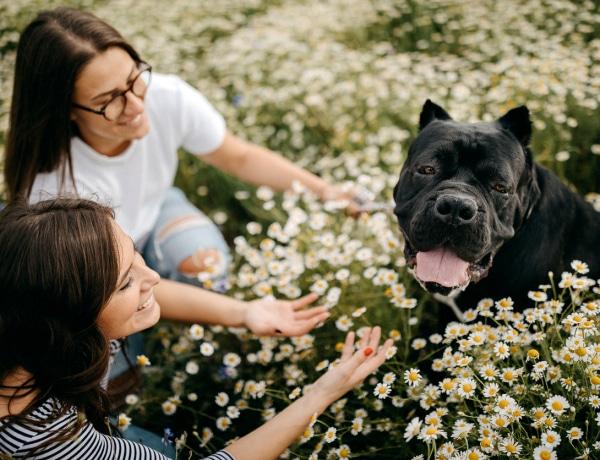 A kutyád imádja a gyógynövényeket. Te tudod, mikor melyiket add neki?