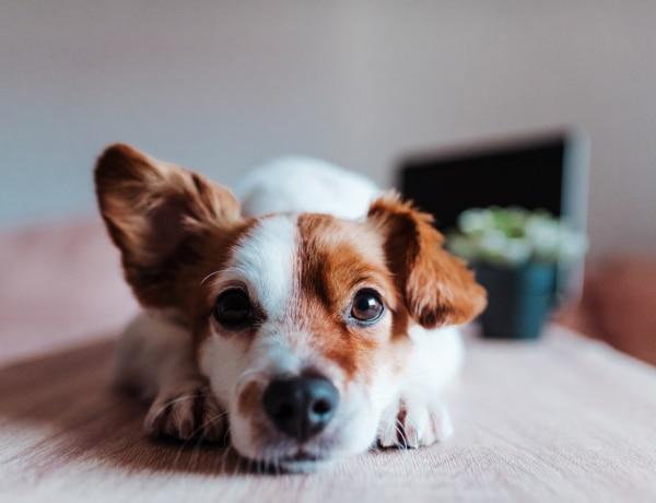 Sokat ugat a kutyád? 6 ok, ami meghúzódhat a háttérben