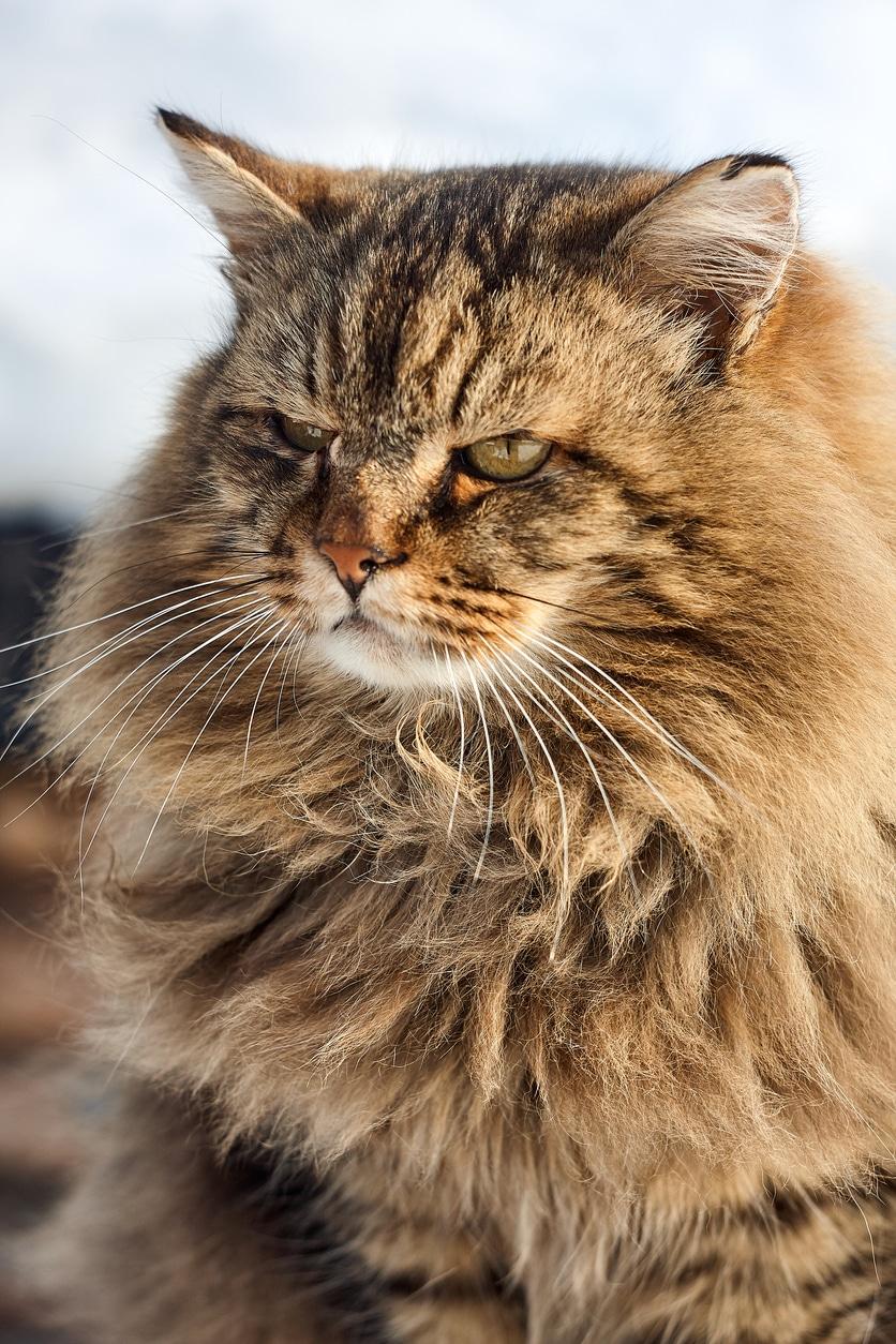 Bosszú macskával