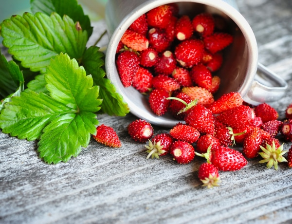 Megeheted a pipacsot? 8 ehető vadnövény, amit gyakrabban is ehetnénk