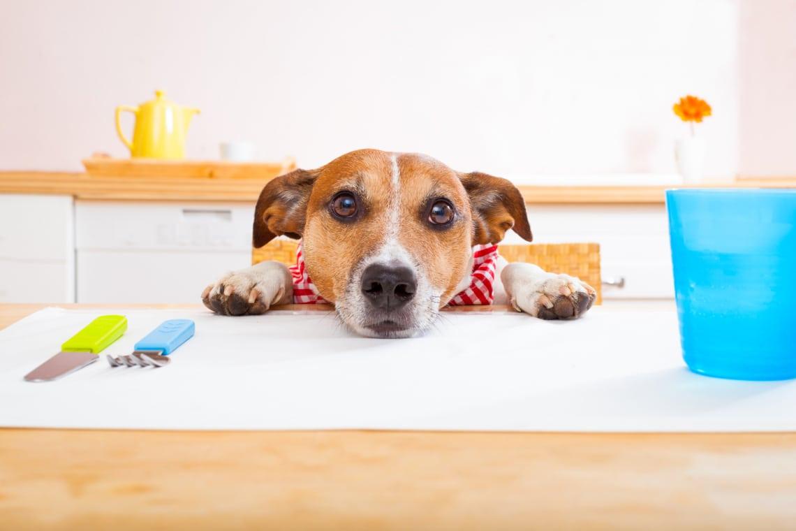 Kutya diéta – avagy hogyan fogyasszuk le túlsúlyos kutyánkat?