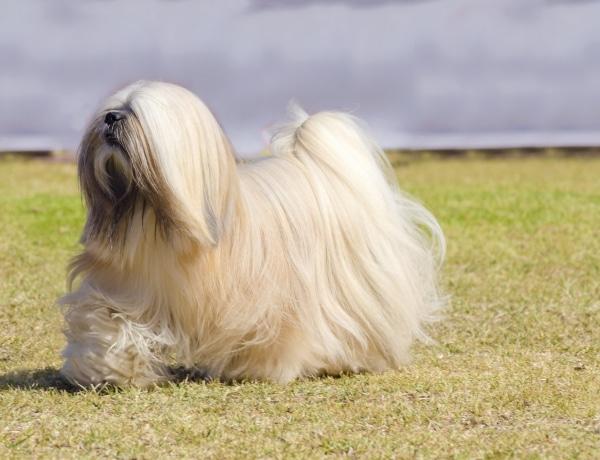 A 10 legfurcsábban kinéző kutyafajta – de éppen emiatt annyira cukik!