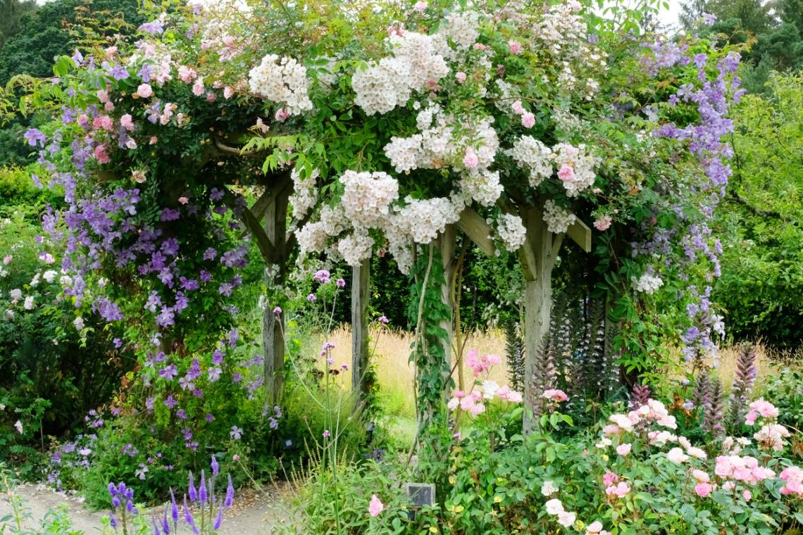 A lugasok és kerítések ékei: 6 pompás virágokat bontó futónövény