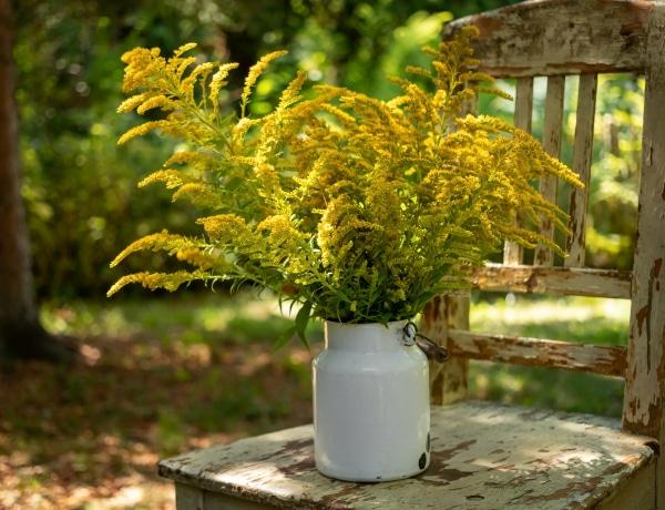 Van egy növény, ami száz orvosságnál is többet ér