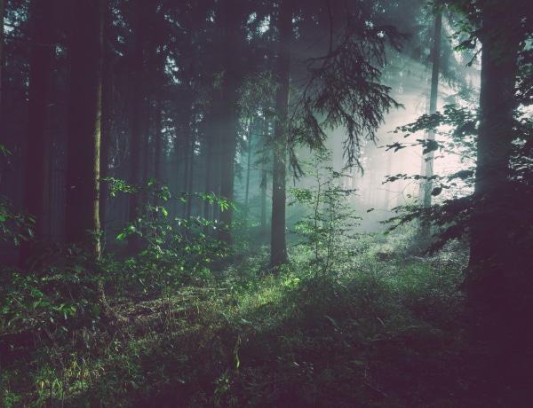 Az erdei levegő gyógyhatásai – akár az otthonodban is