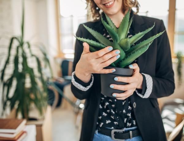 A növények beszélni próbálnak hozzánk – Egy különös kísérlet