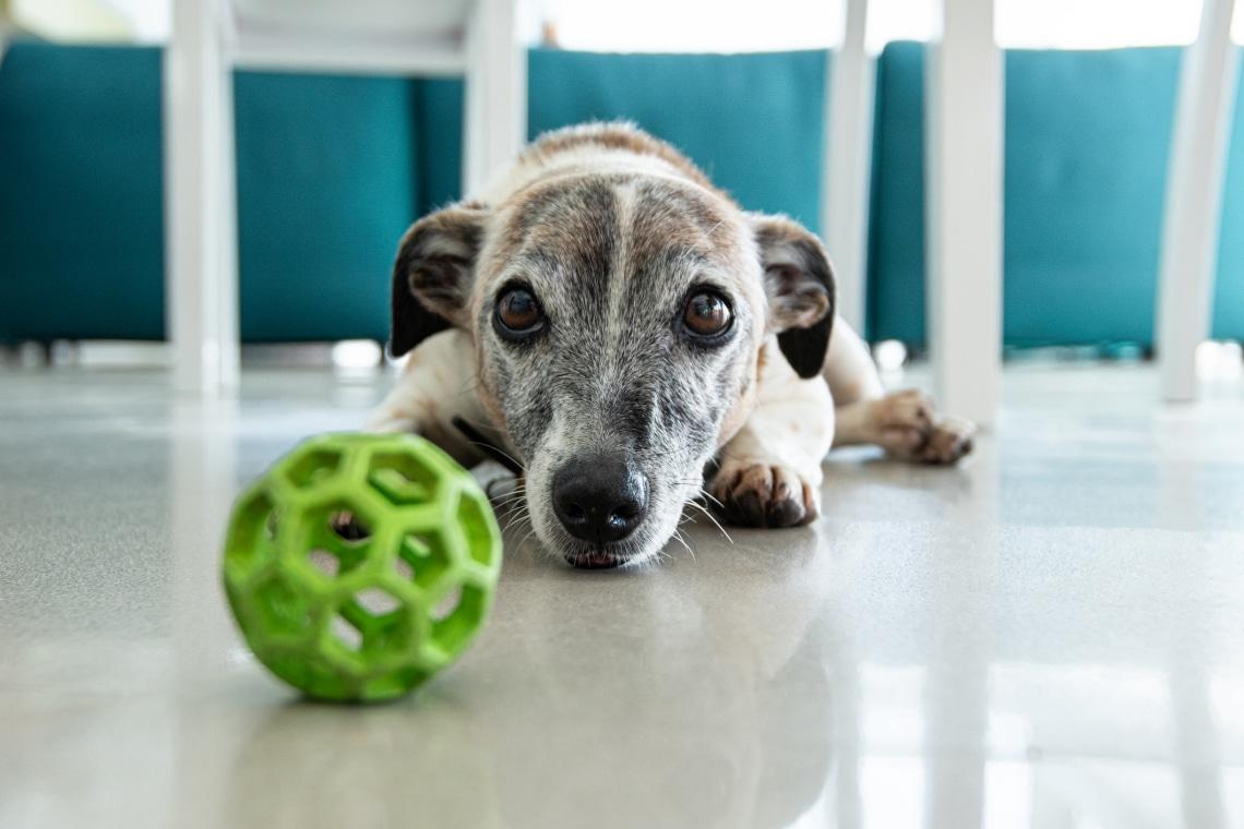 Ezek a kutyafajták nagyobb eséllyel épülnek le mentálisan
