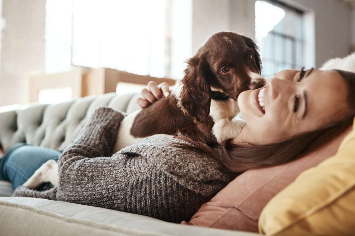 A kutyák ösztönösen megérzik, mit akar a gazdájuk – Hogy lehet ez?