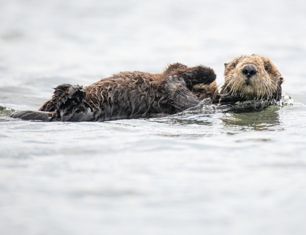 A világ legcukibb állatai a klímaváltozás ellen is tehetnek