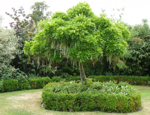 Melyik fát ültetnéd a kertedbe? A válaszod rólad és a jövődről is árulkodik