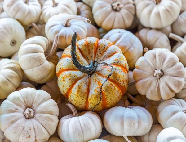 Tökvarázs: a legszebb őszi dekorációk dísztökökből