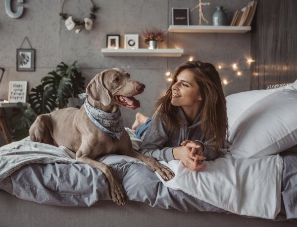 50 kutyafajta, 50 gazdi személyiség. Mit árul el kutyád fajtája a személyiségedről?