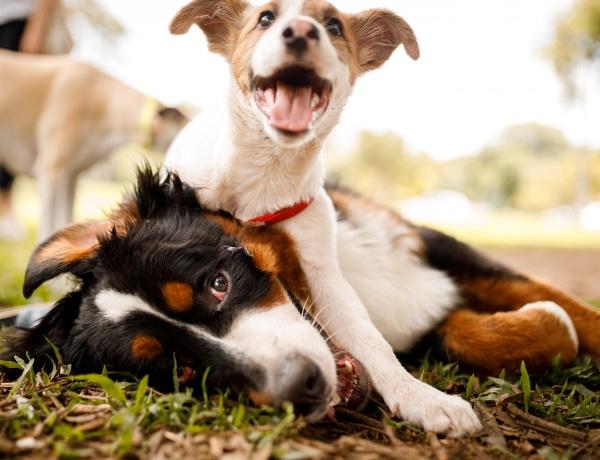 Így válassz kutyapanziót – az 5 legfontosabb szempont