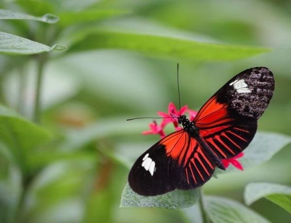 Válassz egy pillangót és megtudod, melyek a legkülönlegesebb tulajdonságaid